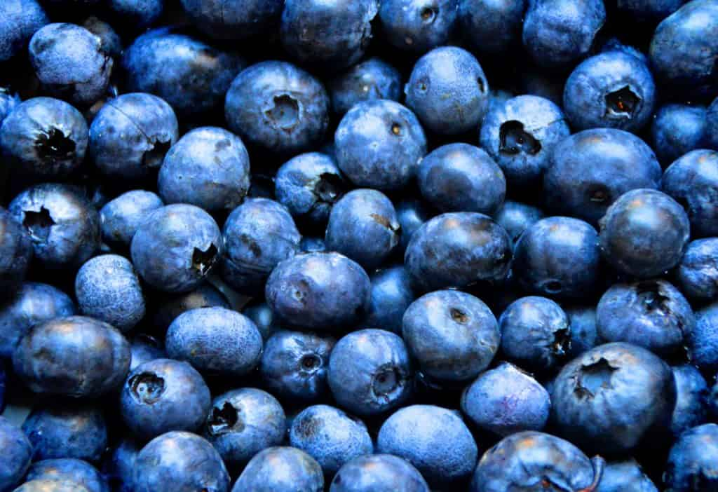 Dogs Eat Blueberries Safe